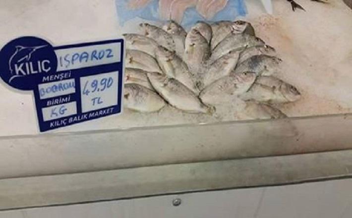 Isparoz Balığı Nedir? Isparoz Izgara Nasıl Yapılır???