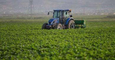 Son Dakika....2019 Buğday Desteği Ne Kadar?